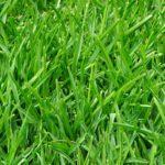下準備をシッカリと!芝生を張る手順を知って綺麗な庭造り