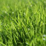 機械式より人力で!芝は手で刈った方がいい場合もある