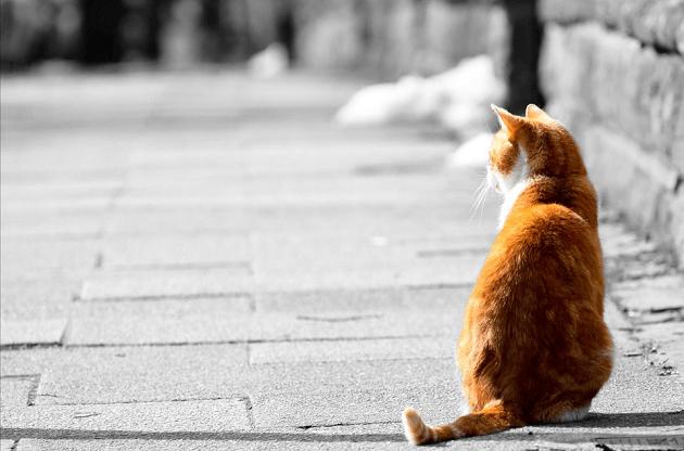 忙しいから「猫の手も借りたい」