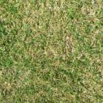 5月でもまだ間に合う?芝生のすき間に残った枯れ草を除去できるのかやってみた
