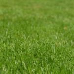 芝生放置10cm超え?刈り取る前に1つだけ気をつけるべきこと