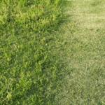 4月芝が生える前に草ぼうぼう!手押し電動芝刈り機で除草してみたら・・