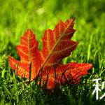 秋の芝メンテナンスは高さが基準じゃない!やれる時にやるべし