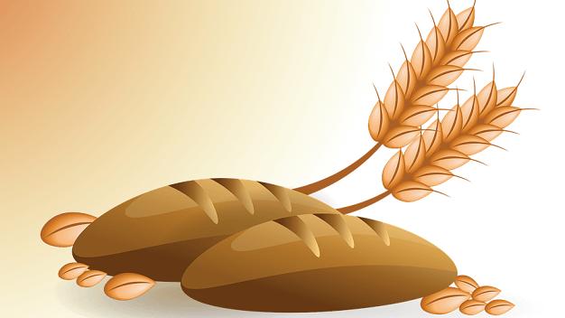 タンパク質含有量(穀物)