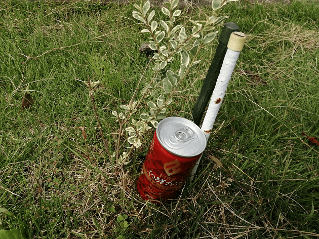 育ちが悪いシルバープリペット苗木