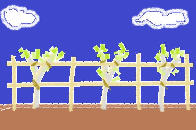 生け垣用苗木のアシスト