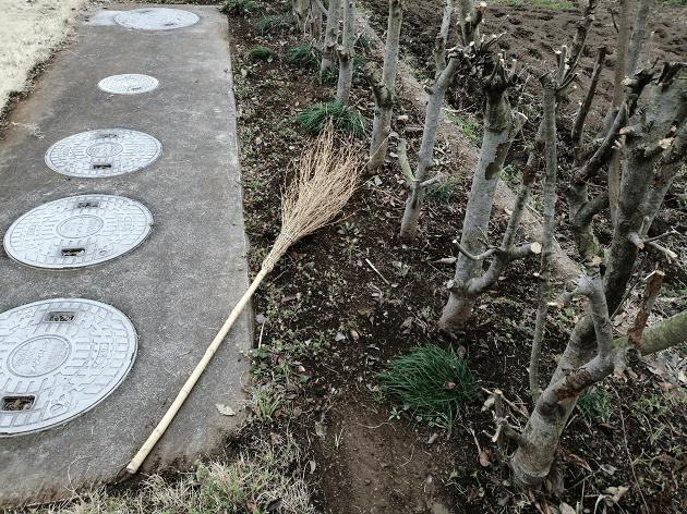レッドロビン病気の元の枝葉を掃除