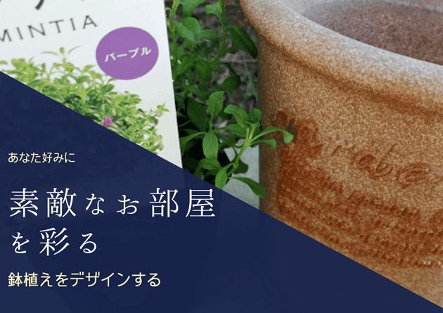 観葉植物を鉢に植え替える
