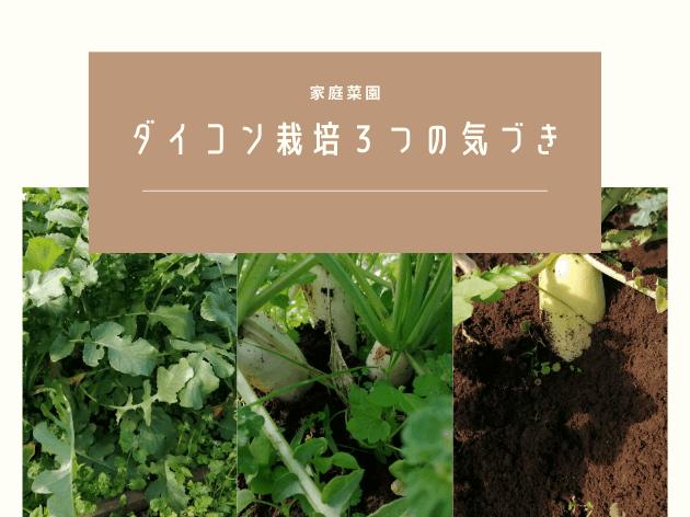 ダイコン栽培3つの気づき